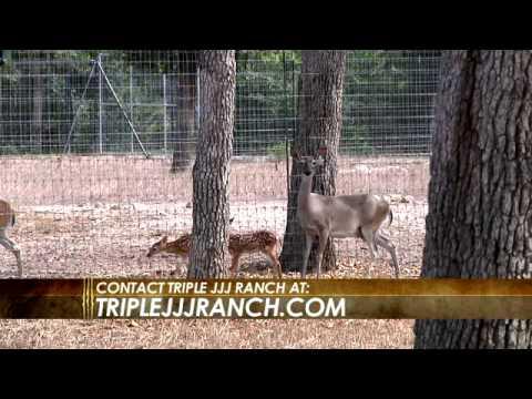 Triple JJJ Ranch - Deer & Wildlife Stories