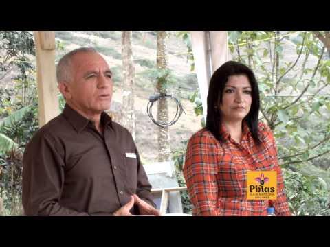 Entrega de plantas de café a agricultores del cantón Piñas