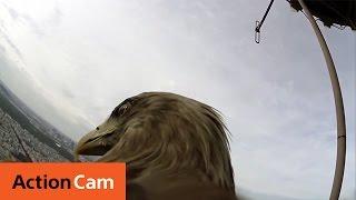 Un águila con una cámara nos muestra como es su vuelo sobre París
