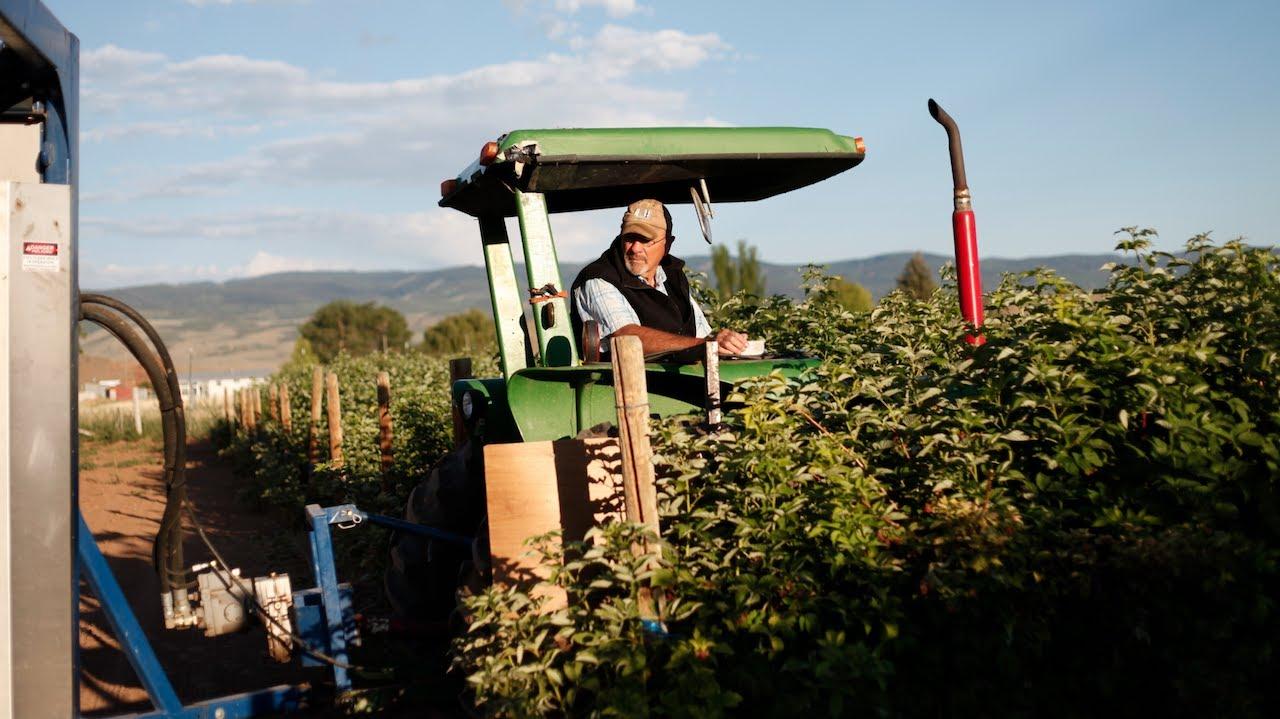 raspberry harvesting machine