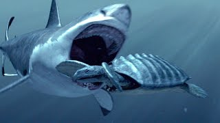 How The Megalodon Hunted | SHARK WEEK