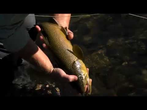 BROWN TROUT & KELLY GALLOUP SURPRISE
