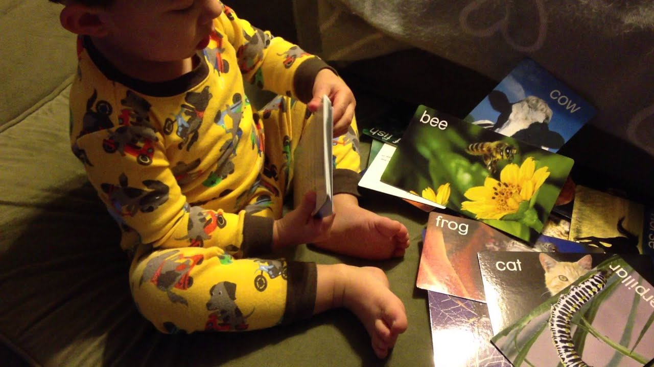 learn animal names with baby einstein flashcards amp dylan