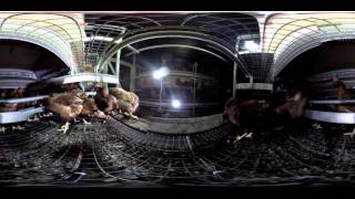"360-Degree Video Shows the Truth about ""Free Range"" Eggs"