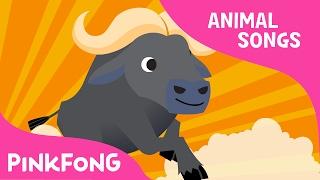 Follow Me Buffalo | Buffalo | Animal Songs | Pinkfong Songs for Children