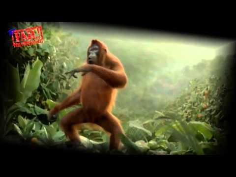 Прикол   Танцующая обезьяна  Всем хорошего дня!