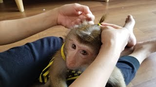 Monkey Baby Nui | Joy is only Nui and Mother