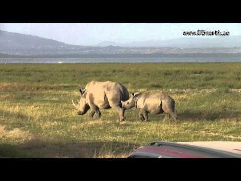 Wildlife of Kenya - Lake Nakuru National Park