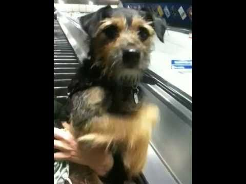 Thumb Dog Confused By Electric Escalator