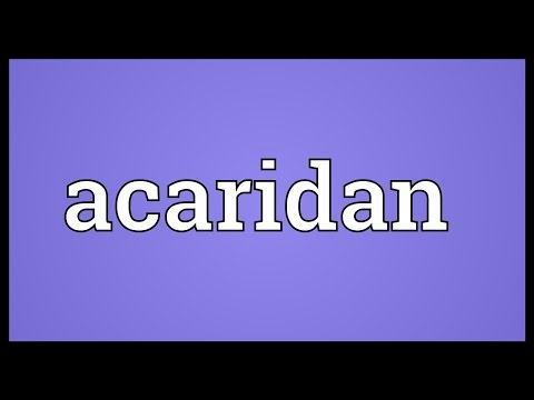 Header of acaridan