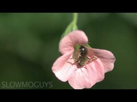 Fly Eats Fly in Slow Motion - The Slow Mo Guys