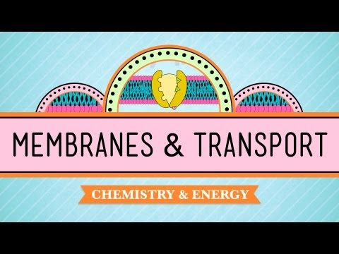 In Da Club - Membranes & Transport: Crash Course Biology #5