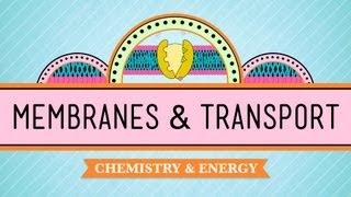 In Da Club - Membranes & Transport: Crash Course Biology #5