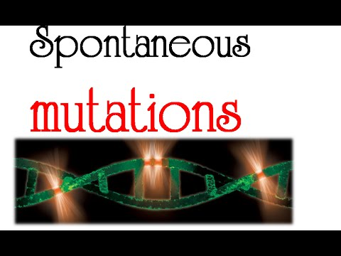 Origin of spontaneous mutations
