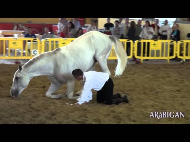 Doma Natural | Pasión por los caballos