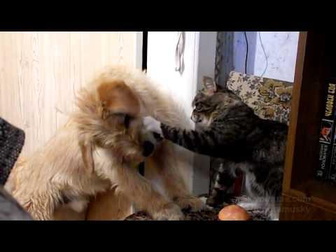 勝者はどちらに?!チーズバーガーを取り合う犬と猫