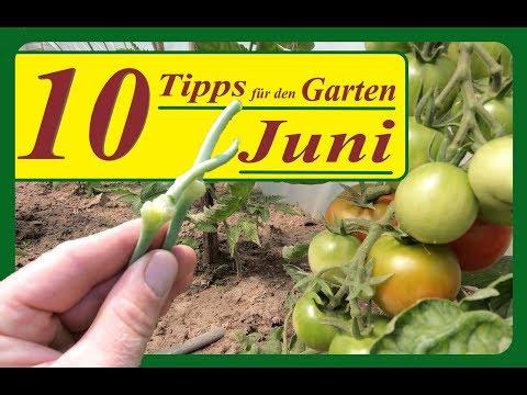 10 Tipps Für Den Garten Im Juni