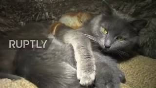 Nuts about each other! Cat adopts baby squirrels in Crimea
