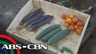 Salamat Dok: Organic Vegetables   Discussion