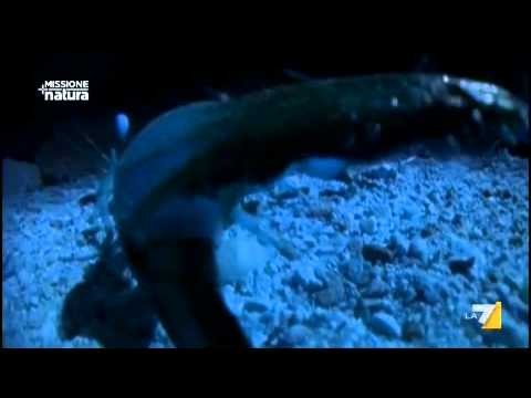 MISSIONE NATURA 17/07/2011 – La danza dello scorpione
