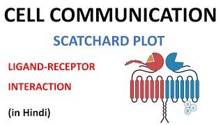 Scatchard Plot (Hindi)