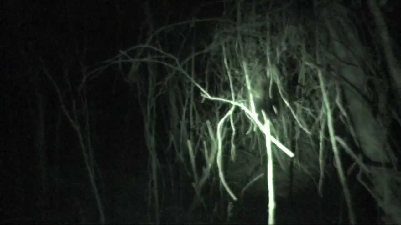 Slender Man Marble Hornets Sightings Entry  62