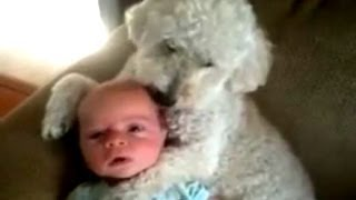 Dogs Love Babies Compilation 2014 [NEW]