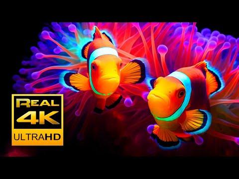 4K Soothing Clown Fish Nemo Aquarium & Relax Music - Sleep Meditation - 2 hours - UHD Screensaver