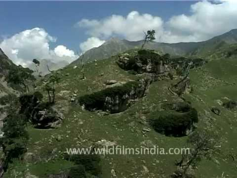 Spring Waters Flowing Down Himalayan Mountains, Jammu & Kashmir video