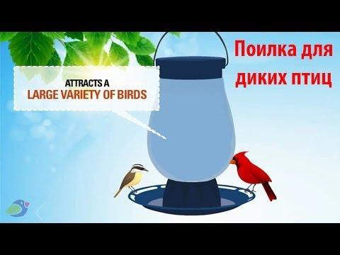 Поилка для диких птиц своими руками 25