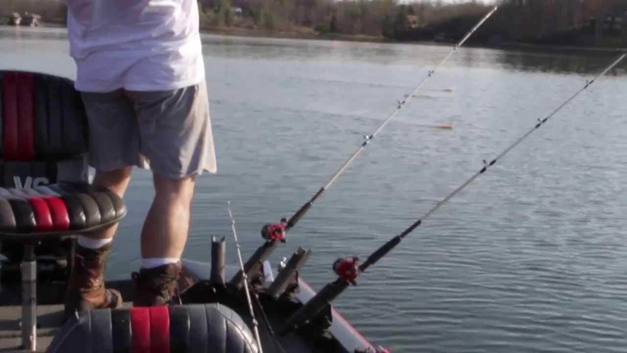 Striper fishing sml smith mountain lake with live bait for Smith mountain lake striper fishing