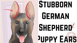 How to Tape Up Stubborn German Shepherd Puppy Ears