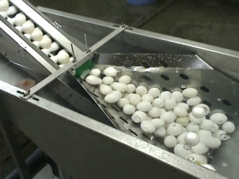 割卵機 75型水槽供給タイプ 三共技研