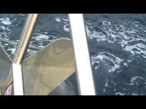 White-beaked dolphins bowriding Therica Video