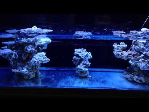 200g Reef Tank Episode 15 Rock Curing Part 1 Youtube