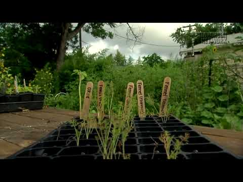Longhorn Network Vignette - The UT Micro Farm