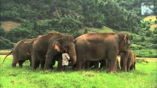 Elephant Whisperer - Wildscreen Festival Nominee 2012