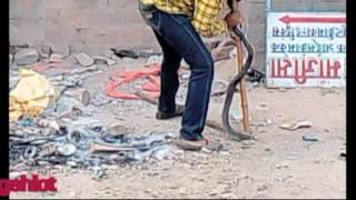 The easiest way to catch the snake साप पकड़ने का आसन तरीका