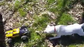 Dogs freak out over HBX Keliwow Dune Thunder 12891 RC Buggy - Hilarious!