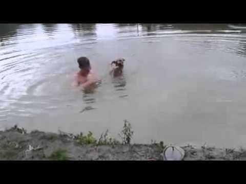 un perro ve que su dueno se ahoga