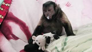 Tired Baby Monkey