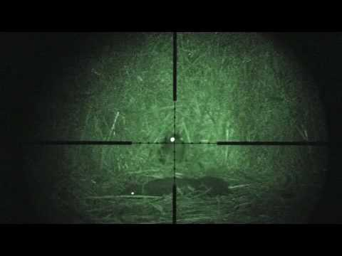 Rat shooting with Weihrauch HW 100 .177 12ftlbs (Humane vermin control) night vision by snypercat