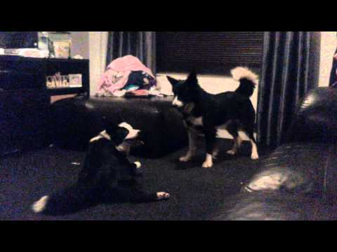 These Dogs Are Fucking Crazy :l video