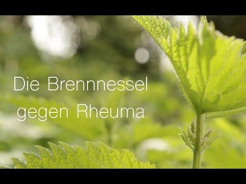 Viriditas-Heilpflanzenvideo: Brennnessel gegen Rheuma
