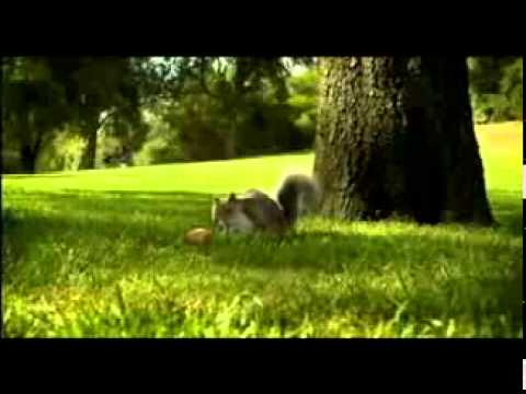 Nestle KIT KAT squirrel Ad Aug 2010 Break Banta Ha.mp4