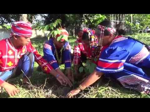 As way of gratitude, Lumads plant trees at UP Diliman