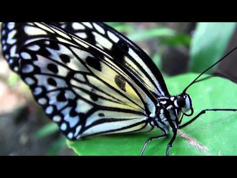 The top 10 of the best butterfly shots with nature Sound
