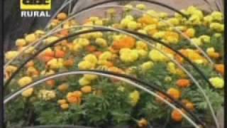Cuidados de plantas ornamentales
