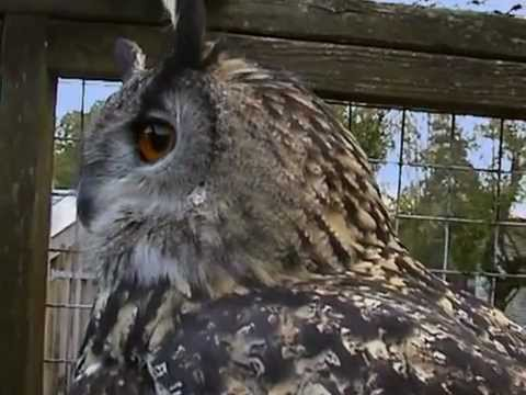 National Geographic Wildlife Wonders, Owls - The Silent Hunters