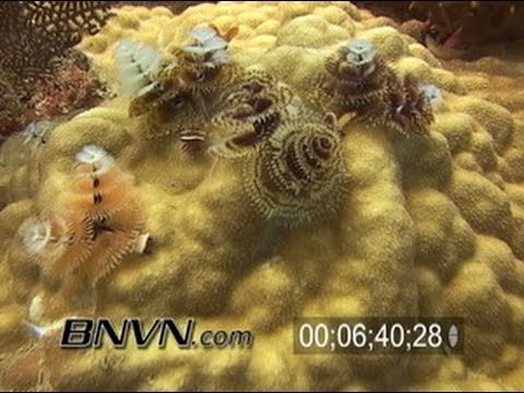 7/17/2004 Dry Tortugas Coral Reef Diving Video